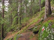 Wald im Tageslicht stockfotografie