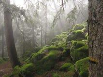 Wald im Tageslicht lizenzfreie stockfotografie