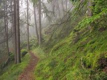 Wald im Tageslicht lizenzfreies stockbild