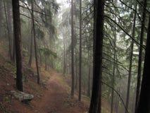Wald im Tageslicht stockfotos