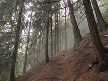 Wald im Tageslicht stockbilder