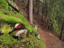 Wald im Tageslicht stockbild