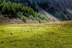 Wald im Talschatten Stockfoto