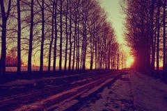 Wald im Vorfrühling Lizenzfreies Stockbild
