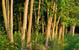 Wald im warmen Tageslicht eines Morgens Stockfotos