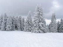 Wald im Weiß, Pamporovo stockfoto