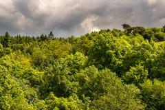 Wald im Westpennin macht fest Lizenzfreies Stockbild