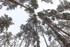 Wald im Winter Lizenzfreie Stockbilder