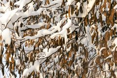 Wald im Winter Stockfoto