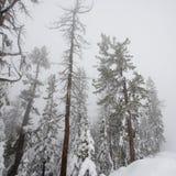 Wald im Winter Lizenzfreie Stockfotos