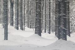 Wald im Winter Lizenzfreies Stockfoto