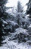 Wald im Winter Stockbild