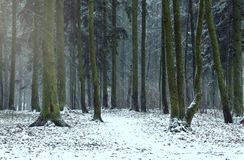 Wald im Winter Stockfotos