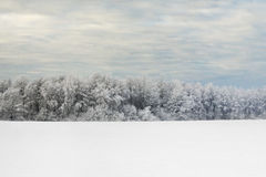 Wald im Winter Lizenzfreies Stockbild