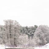 Wald im Winter Stockfotos