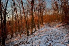 Wald im Winter am Abend erleuchtet durch Sonne stockfoto