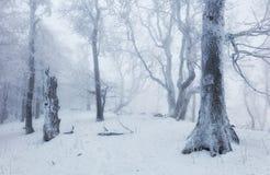Wald im Winter mit Nebel und Schnee gestaltet landschaftlich Lizenzfreie Stockfotografie