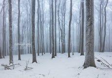 Wald im Winter mit Nebel und Schnee gestaltet landschaftlich Lizenzfreie Stockfotos