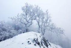 Wald im Winter mit Nebel und Schnee gestaltet landschaftlich Stockbild