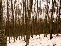 Wald im Winter mit Schnee Stockfotografie