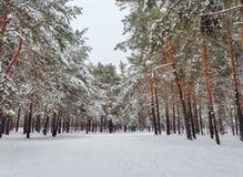 Wald im Winter mit Schnee auf den Niederlassungen von Bäumen Lizenzfreie Stockfotos