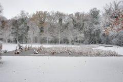 Wald im Winter mit weißem Schnee und ein gefrorener See in den Niederlanden Stockbilder
