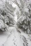 Wald im Winter mit weißem Schnee und einer gefrorenen Straße mit Abdrücken Stockfotografie