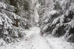 Wald im Winter mit weißem Schnee und Männer, die auf die Eisstraße gehen Lizenzfreie Stockfotos