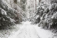 Wald im Winter mit weißem Schnee und Männer, die auf die Straße gehen Stockfoto