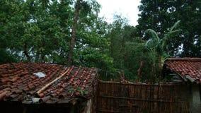Wald innerhalb des Hauses stockfotografie