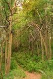 Wald in Inyo-Staatsangehörigem Forest Park Lizenzfreies Stockfoto