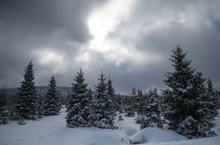 Wald in Jizerka/in Klein Iser während des Winters Lizenzfreie Stockbilder