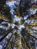 Wald in Kanada Lizenzfreie Stockfotos