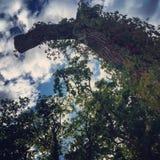 Wald in Kiew Lizenzfreies Stockbild