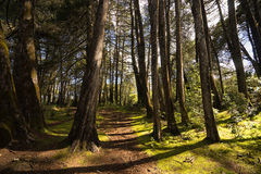 Wald in Kolumbien lizenzfreies stockfoto