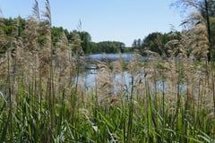 Wald lake2 stockbild