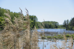 Wald lake3 stockbild