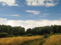 Wald, landwirtschaftlich, Landstraße, laufend ein trockenes Feld durch lizenzfreies stockbild