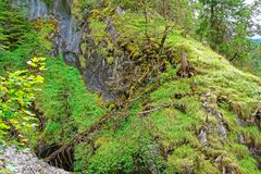 Wald in Lauterbrunnen-Tal in Bern-Bezirk in der Schweiz Lizenzfreie Stockbilder