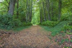 Wald in Lavardin Stockfotos