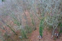 Wald in Le Puy-en-Valay von oben frankreich Lizenzfreie Stockbilder