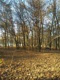 Wald leblos lizenzfreie stockfotos