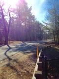 Wald in Maine Stockbild