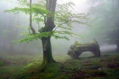 Wald mit Lizenzfreie Stockbilder