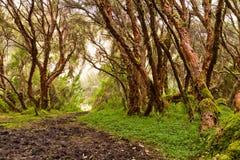 Wald mit Bäumen in der Natur und im grünen Holz Stockbild