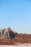 Wald mit Bäumen im weißen Schnee und im blauen Himmel Stockbild