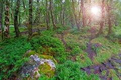 Wald mit Blendenfleck Stockbilder