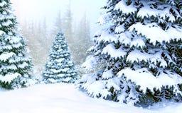 Wald mit den Fichten bedeckt mit Schnee Schöner Winterwald stockbilder
