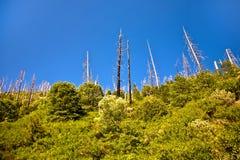 Wald mit durch Feuer beschädigten Bäumen Stockbilder