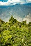 Wald mit einem Berg im Hintergrund Stockfoto